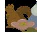 Kars's Squirrel