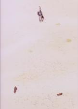 5 1993 OVA Ep. 10.png