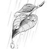 RainyDayAv.png