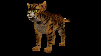ASB Cat.png