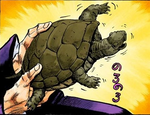 P4 Turtle.png