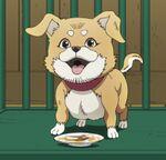 Tonio's Puppy-Anime.jpg