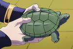 P4 Turtle anim.png